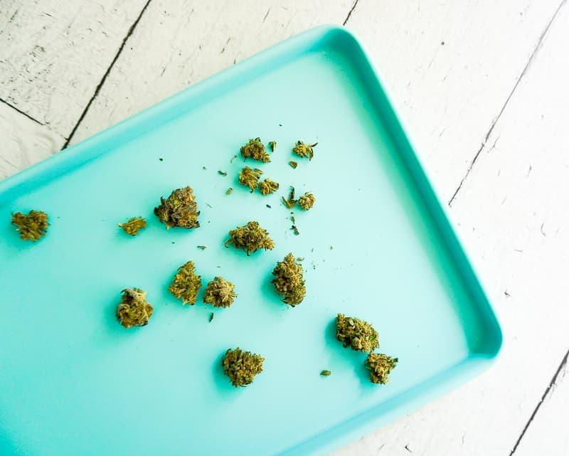 marijuana on a blue cookie sheet